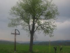 osamelý strom s osamelým krížom pred Kunešovom