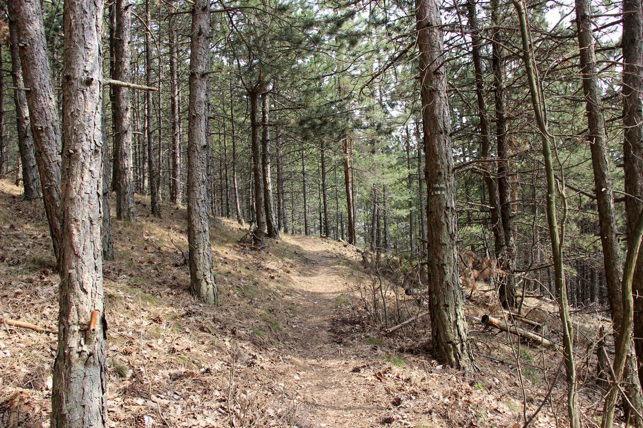 Ihličnaté lesy, Vysoká, Strážovské vrchy