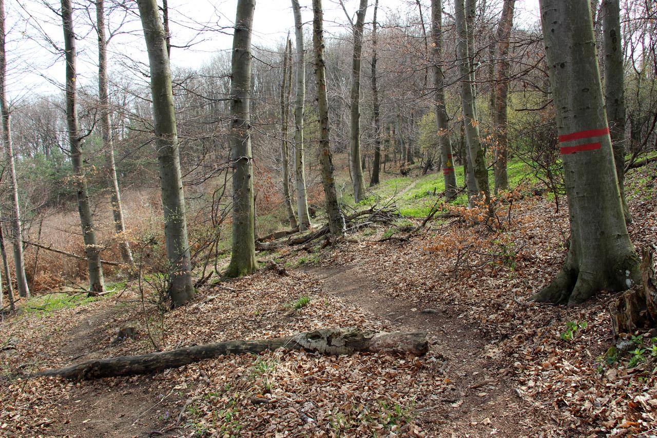 Rezervácia Bradlo, Strážovské vrchy