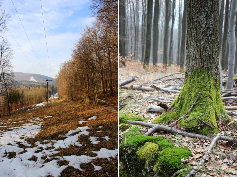 Tesne pod chatou, v pozadí vrchol Inovca a krásne machom porastené kmene stromov - marec