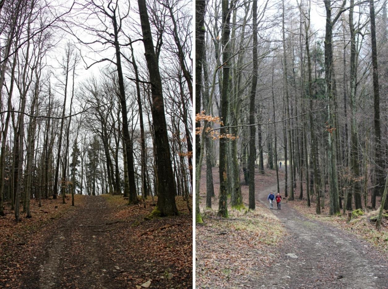 Pekné lesné cestičky na červenej značke