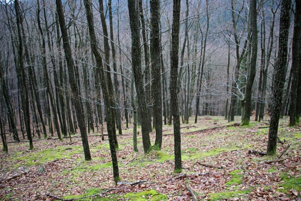 Cikpauza s pekným lesom pred očami - koniec marca