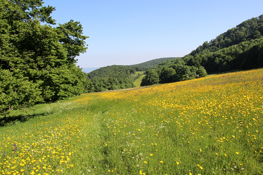 Strážovské vrchy a pohľad späť na zakvitnuté lúky