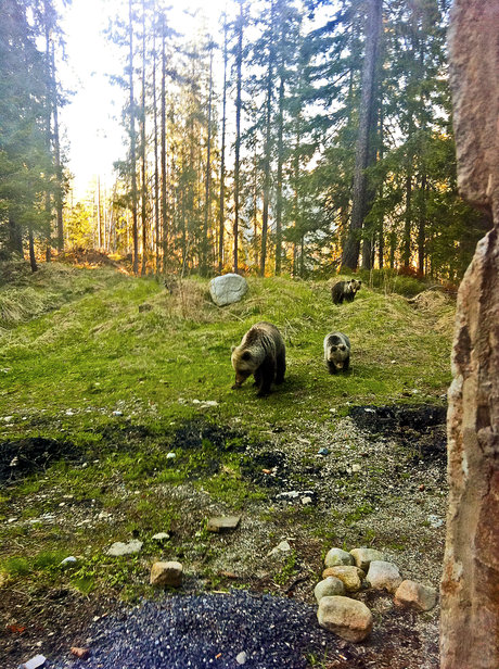 1822731_strbske-pleso-tatry-medved-medvedica-mladata