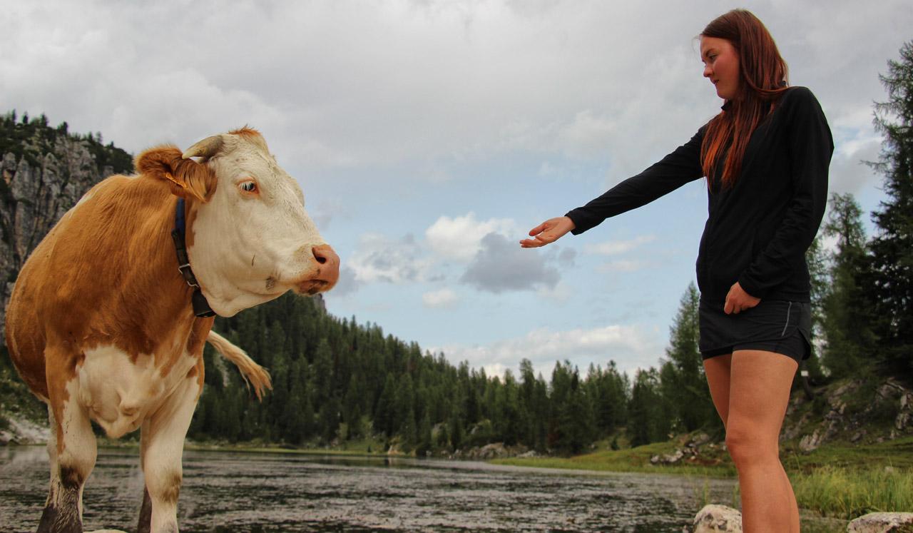 Krava pri Lado Federa