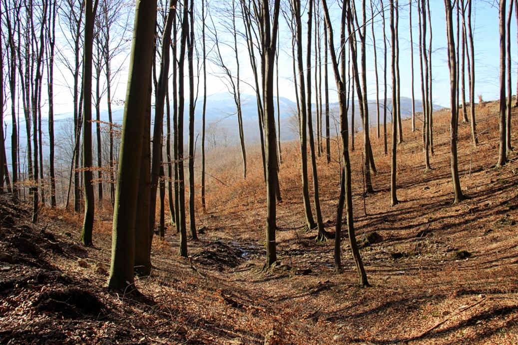 Strážovské vrchy a zbeh z Mackovej do Mníchovej Lehoty s výhľadom na pohorie Považského Inovca oproti