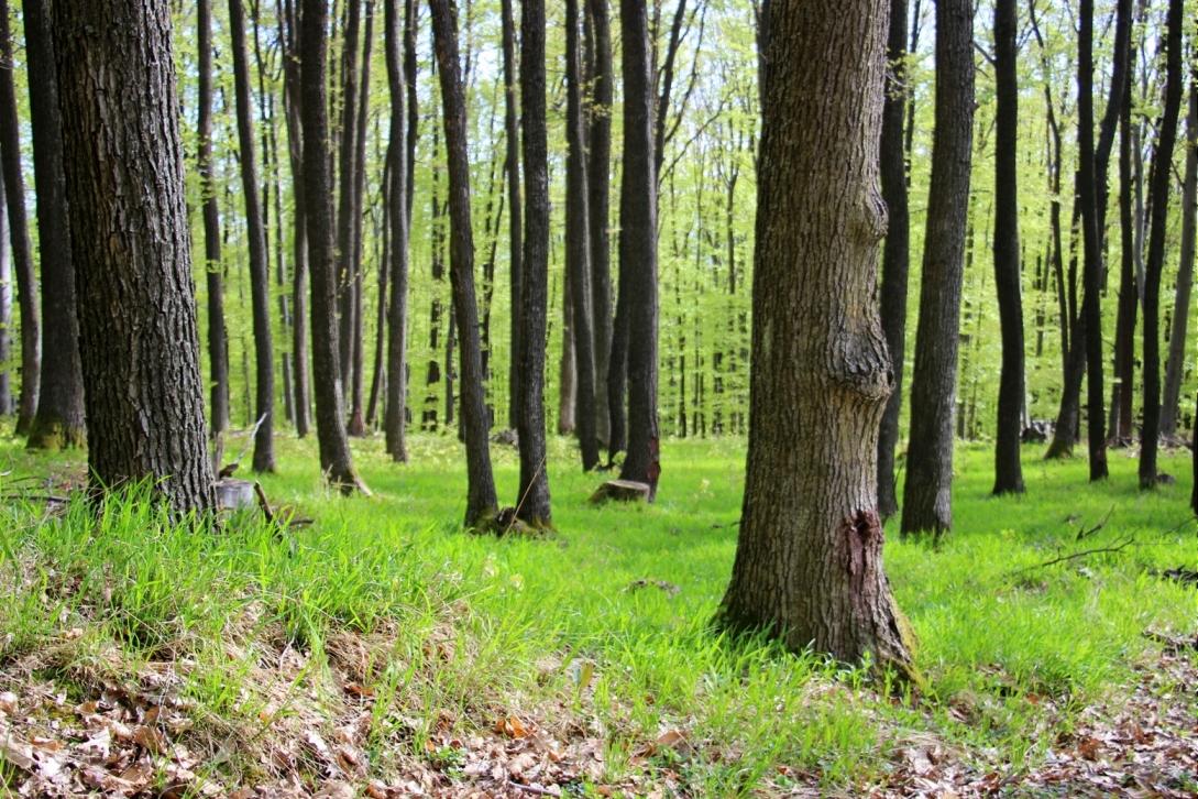 Trávička zelená, ty si naše potešenie ...