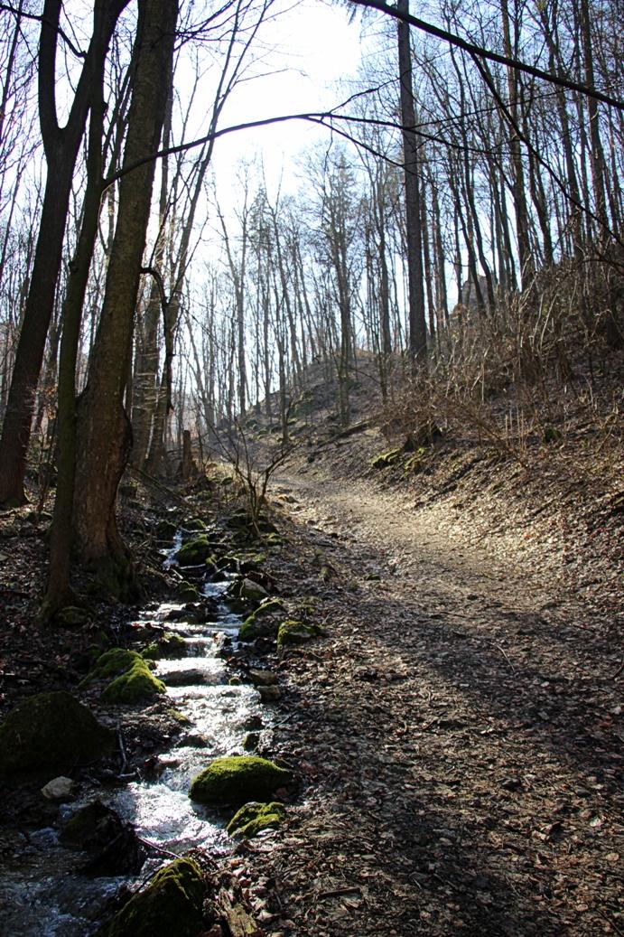 Strážovské vrchy a Mitická dolina - po asfaltke nasleduje stúpanie popri potôčku