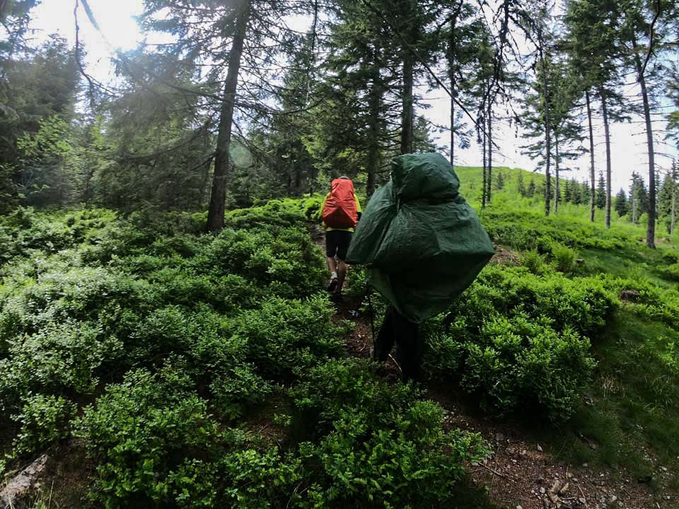 Hrebeňovka Nízkych Tatier Lesy pred Sedlom Čertovica