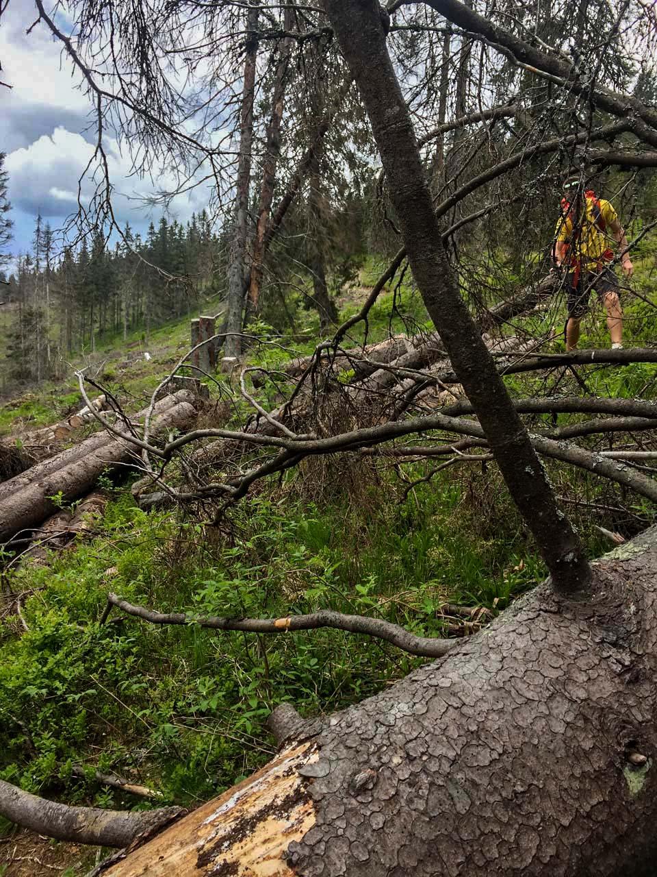 Hrebeňovka Nízkych Tatier Po rúbaní stromov sa neobnovuje turistické značenie a tak sa sem tam stratíte