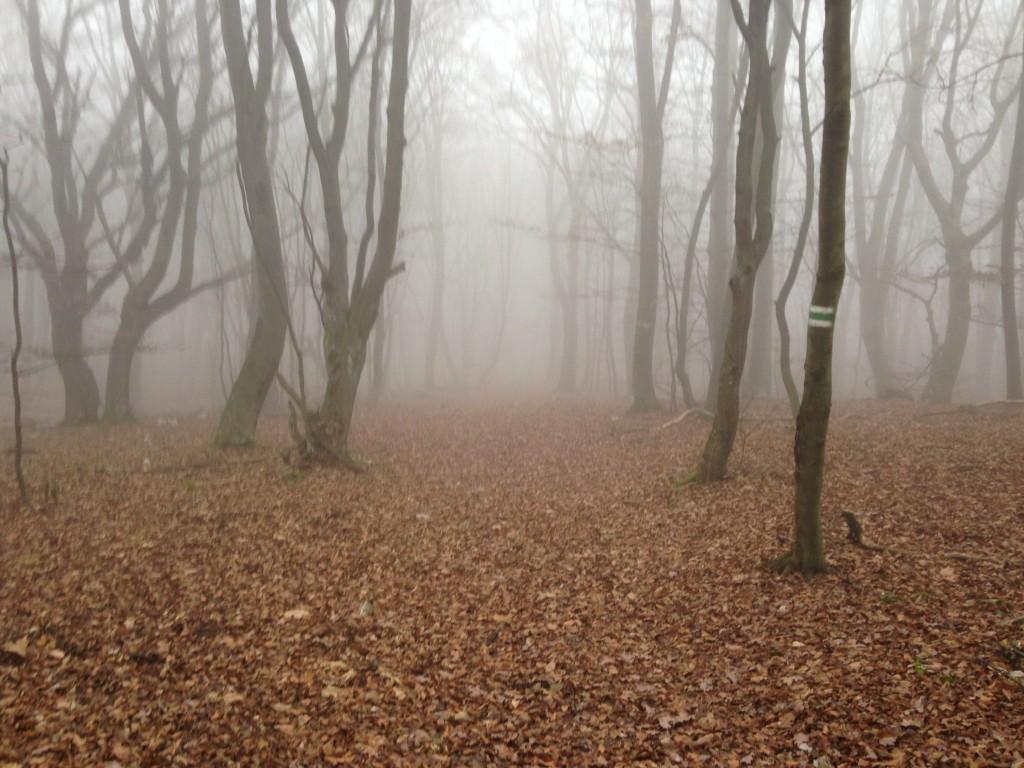 tesne pred planinami...na jeseň je tu často hmla a hore je nádherne...
