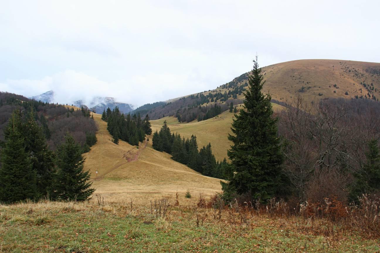 FatraRan 2014:Výhľad z cieľa - sedlo medzi Borišovom a Ploskou