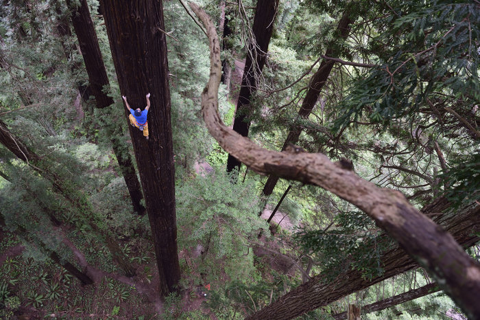 Chris Sharma climbs a Redwood tree in Eureka, CA, USA on 18 May, 2015.