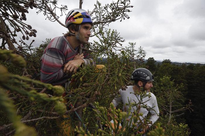 Chris Sharma liezol na Redwoodsky starý strom až do jeho koruny