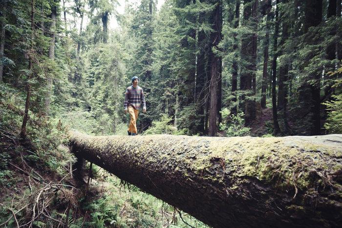 Chris Sharma walks along a fallen Redwood tree in Eureka, CA, USA on 18 May, 2015.