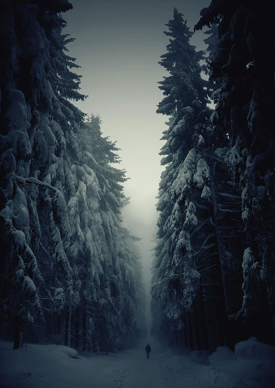 Miesto: Les v Českej republike | Autor: Jan Machata