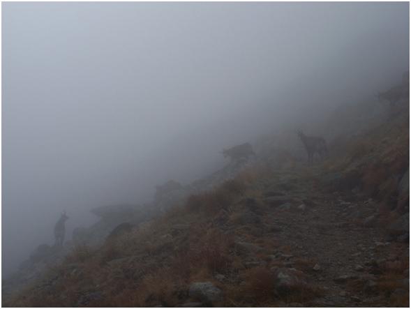 Psotkov Memoriál 2015 kamzíky v hmle