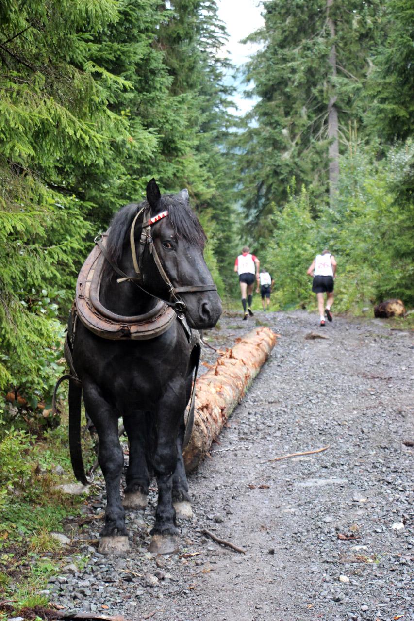 Úzka dolina - ťažný kôň